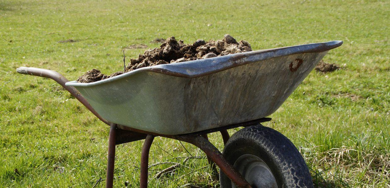 A wheelbarrow full of fertilizer on a green lawn