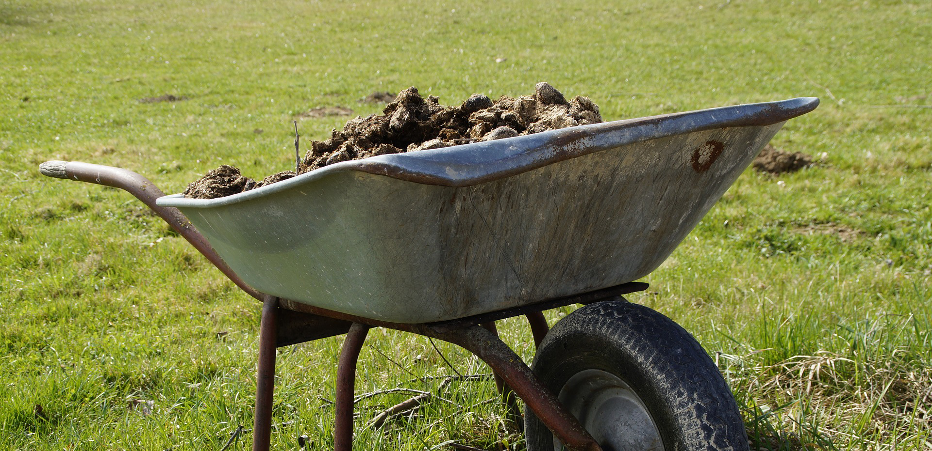 A wheelbarrow full of fertilizer on a green lawn