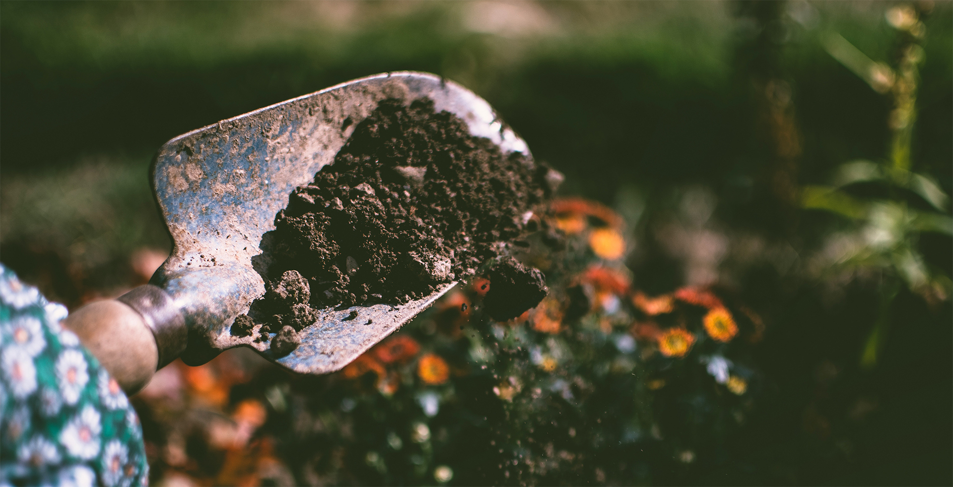 Garden spade lifted with soil, taking a deeper look at soil nutrients