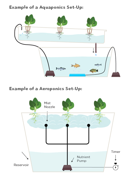 aquaponic vs aeroponic alternatives for hydroponic growth systems