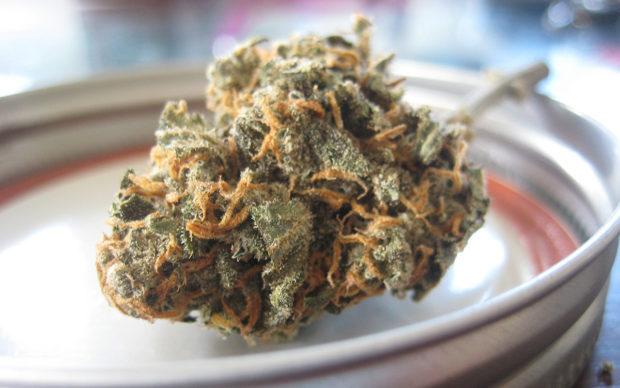 Dried Cannabis Bud in a dish closeup
