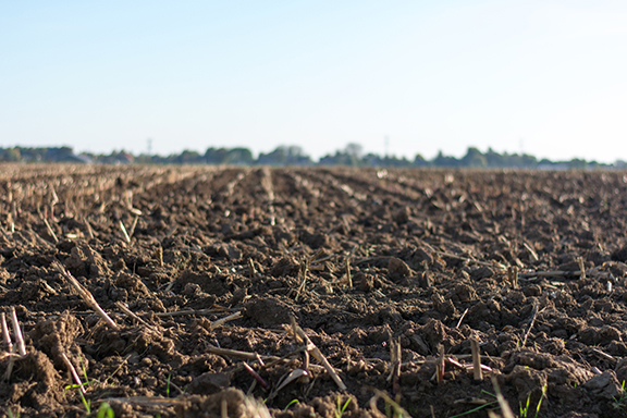 Barren cropland soil highlighting nutrient lockout in growing cannabis