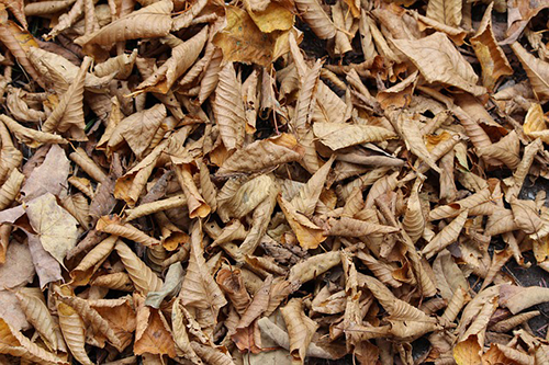 a pile of decomposing leaves