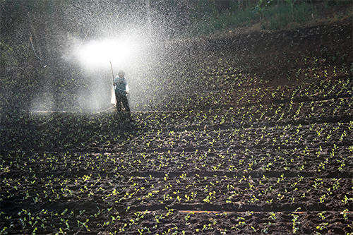 man spraying fertilizer in field