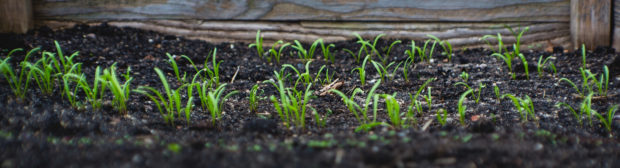 blog post title image showing soil and green growth