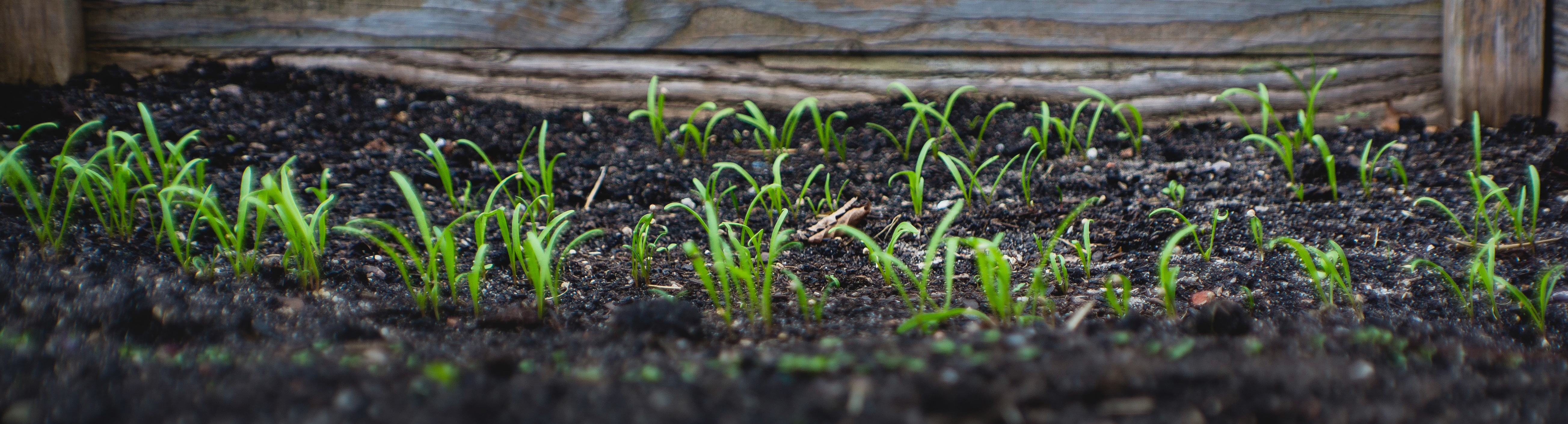 bluesky organics microbial growers