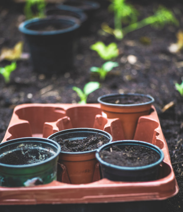 Containers of soil sitting on the ground with plants growing in the background; highlighting the importance of microbial products on soil health