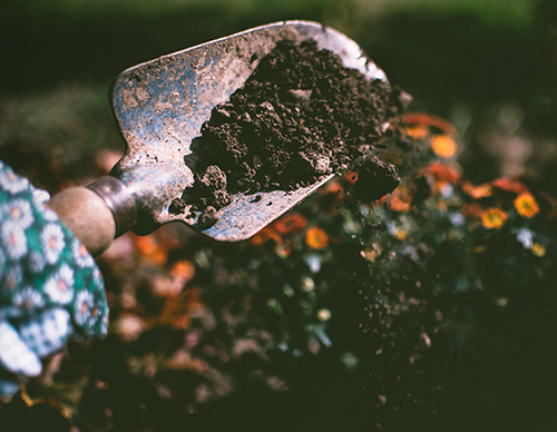 healthy nutrient dense soil in a garden spade