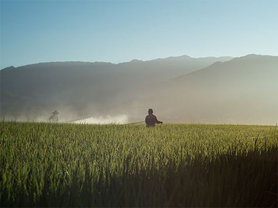 a farmer in a field spraying crops with conventional growing practices