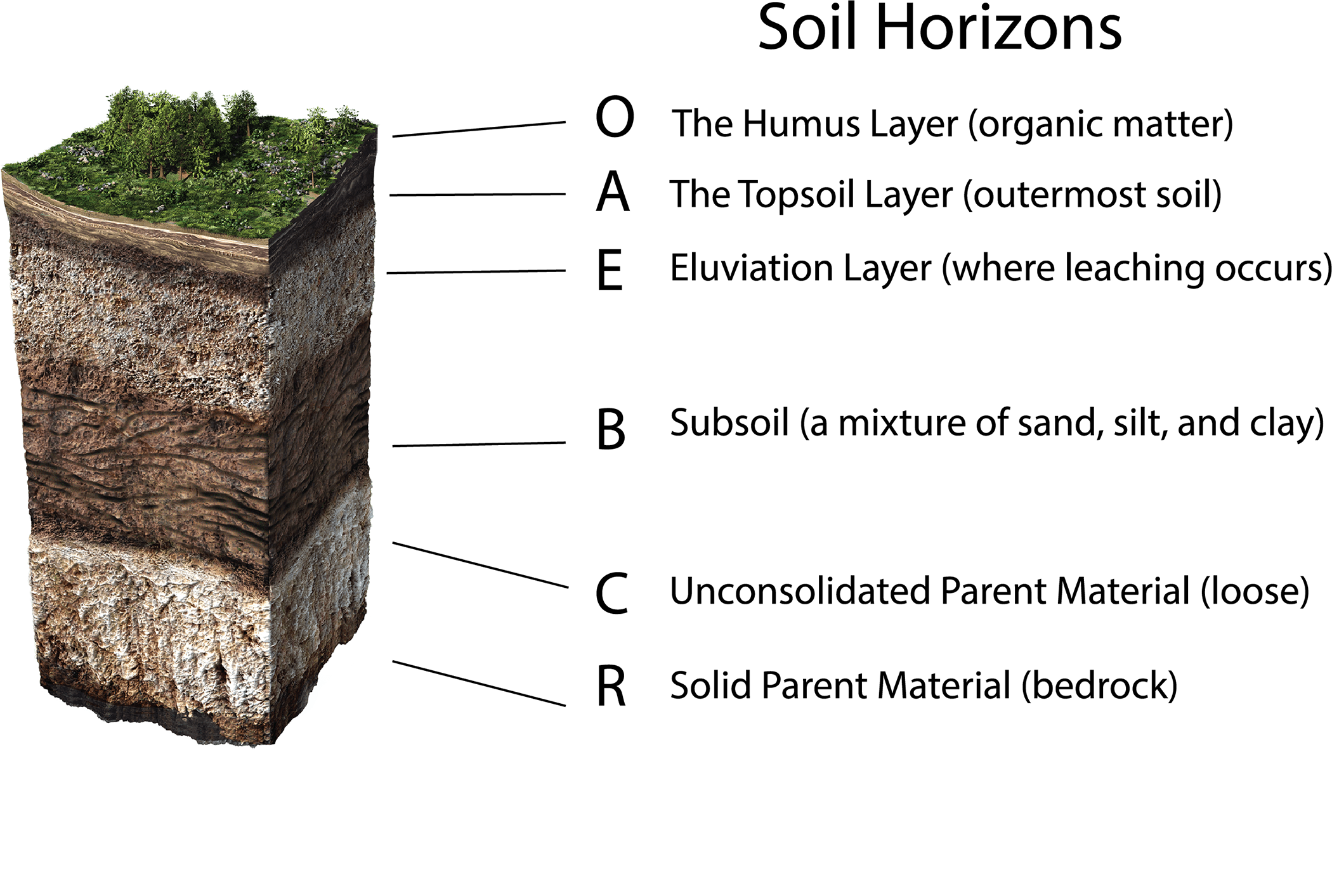a soil profile showing the soil horizons of defining soil