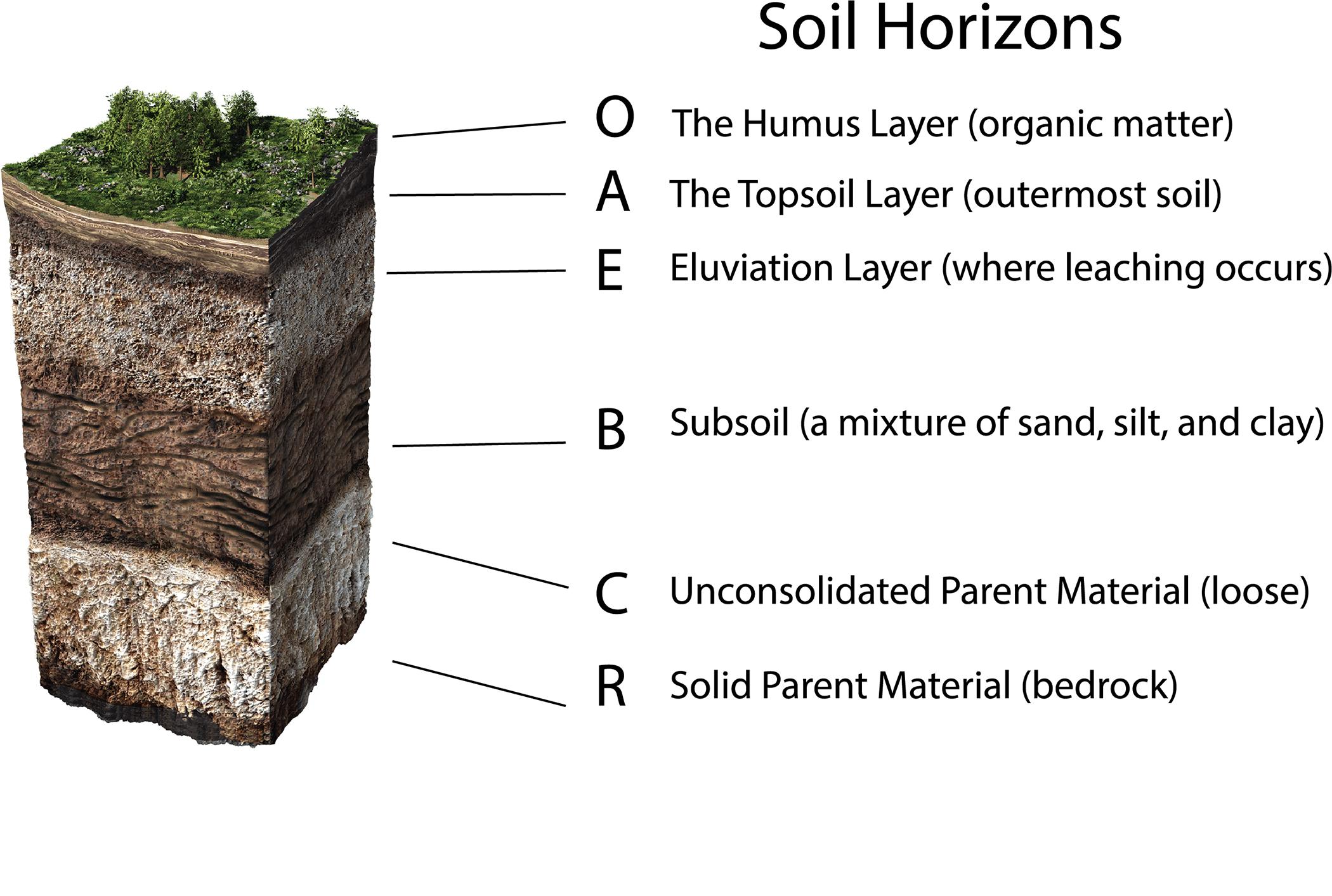 a soil profile showing the soil horizons of defining soil