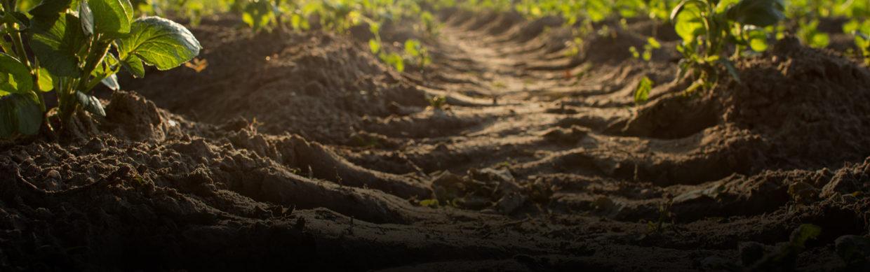 bluesky organics soil loss