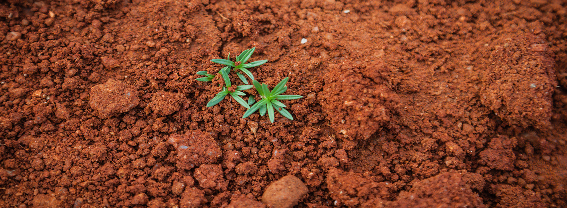 red soil with plant growth illustrating soil texture