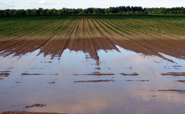 Field with water pooling highlighting water drainage in healthy soil